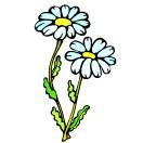 Blumen 43 blumen 44 blumen 45 blumen 46 blumen 47