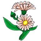 Blumen 67 blumen 68 blumen 69 blumen 70 blumen 71