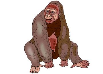 Gorilla Ausmalbilder Kostenlos