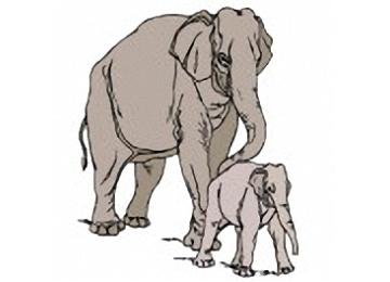 Afrikanischer Elefant Malvorlagen
