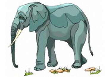 Elefanten Ausmalbilder Gratis
