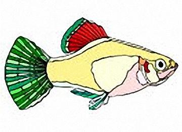 Fische Schablonen Ausdrucken