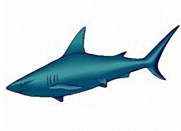 Ausmalbilder Haie