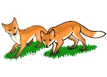 Fuchs zum ausmalen