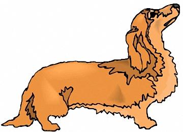 ausmalbilder hunde dackel
