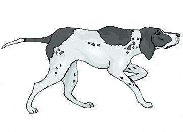 malvorlagen hunde deutsch kurzhaar