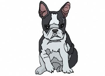 Malvorlagen Hunde Französische Bulldogge