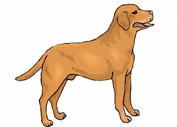 Malvorlagen Hunde Labrador