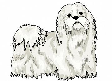 Malvorlagen Malteser Hund