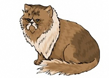 Ausmalbilder Katzen Kostenlos