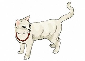 Katzen Malvorlagen Ausdrucken