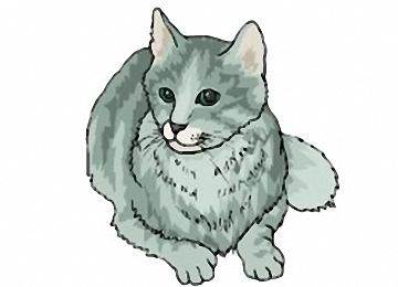 Katzen Zum Ausdrucken