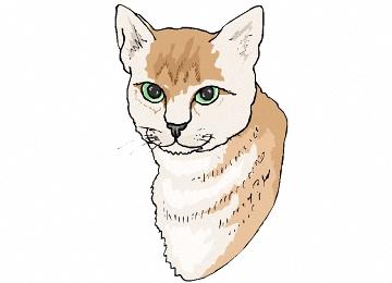 Ausmalbilder Katzenkopf