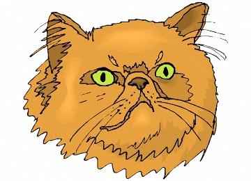 Katzenkopf Gezeichnet
