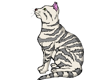 Bilder Zum Ausmalen Katzen