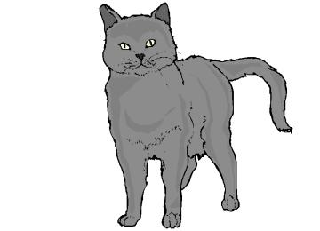 Katzen Ausmalbilder Fur Erwachsene