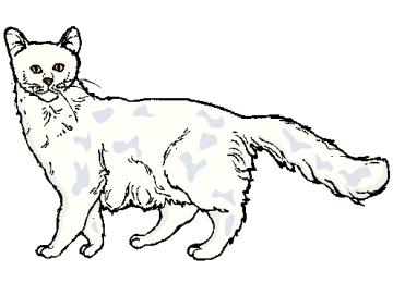 Malvorlagen Kostenlos Katzen