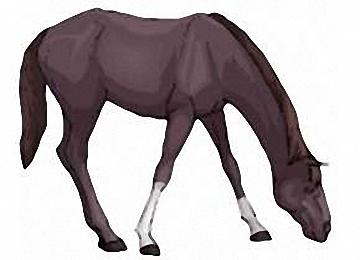 Malvorlagen Pferde Gratis