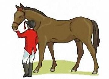 Malvorlagen Pferde Ausmalen