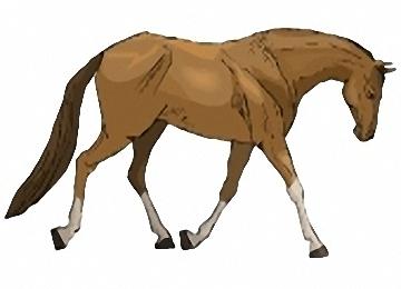 Pferde Malen Einfach