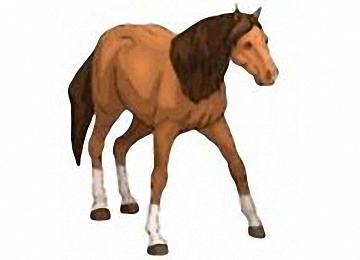 Ausmalbilder Gratis Pferde