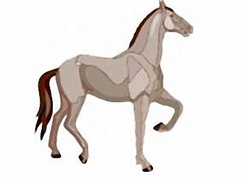 Gratis Ausmalbilder Pferde