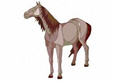 Pferde Malvorlagen Kostenlos Drucken