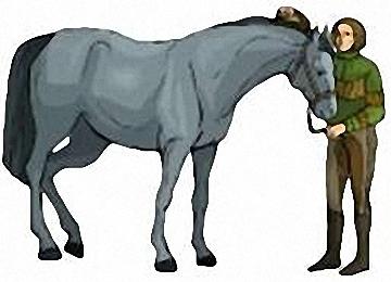 Pferde Ausmalbilder Kostenlos Ausdrucken