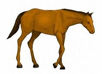Ausmalbilder Pferde Für Erwachsene