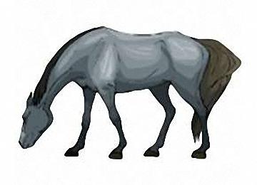 Pferdebilder Ausdrucken