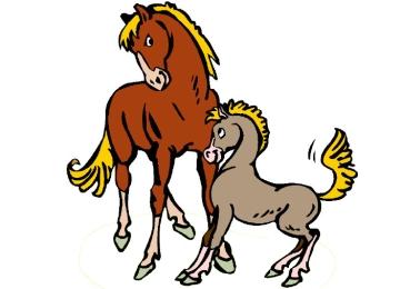 Pferde Ausmalbilder Mit Fohlen