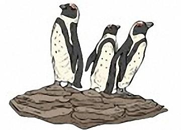 Ausmalbilder Für Erwachsene Pinguine