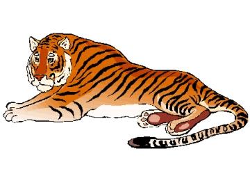 Ausmalbilder Für Erwachsene Tiger