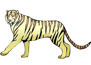 Malvorlagen Erwachsene Tiger