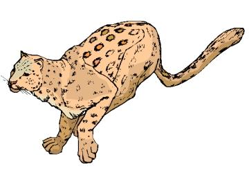 Ausmalbilder Für Erwachsene Gepard