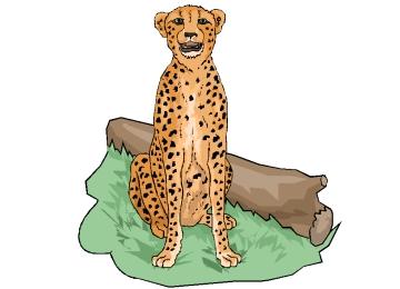 Ausmalbilder Gepard Zum Ausdrucken