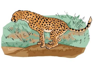 Gepard Ausmalbilder Kostenlos