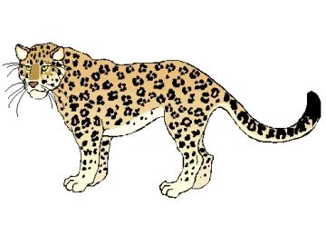 Ausmalbilder Leopard Zum Ausdrucken