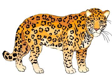 Leopard Ausmalbilder Kostenlos