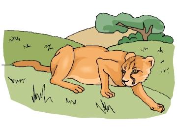 Malvorlagen Puma