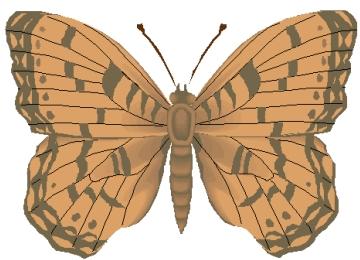Malvorlagen Schmetterlinge Zum Ausdrucken