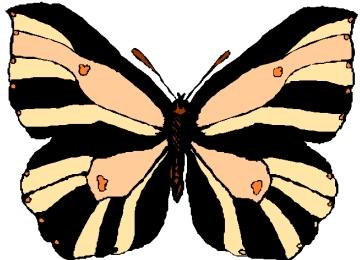 Schmetterling Malvorlagen Zum Ausdrucken