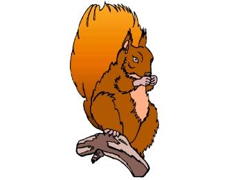 Ausmalbilder Eichhörnchen