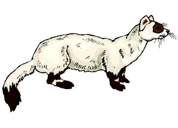 ausmalbilder tiere ausdrucken