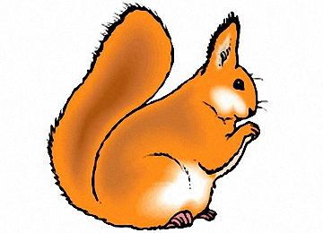 Malvorlagen Eichhörnchen