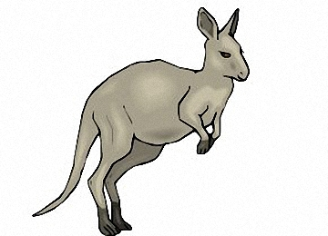 Window Color Vorlagen Känguru