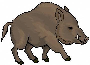 Malvorlagen Wildschweine