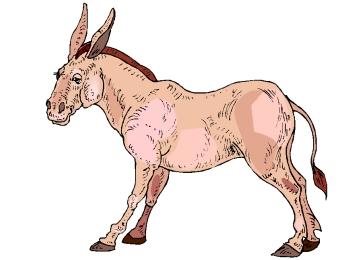 Window Color Malvorlagen Esel