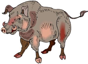 Window Color Malvorlagen Wildschweine