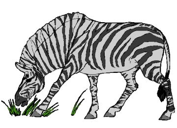 Malvorlagen Gratis Zebra
